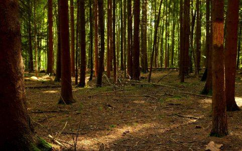 artskyddsförordningen_lavskrikan_skogsstyrelsen_EU