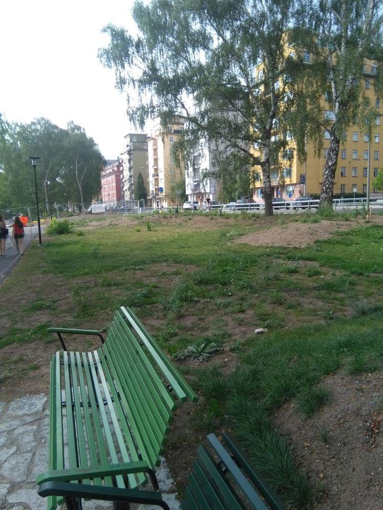 fälla träd kungsholmen_norr mälarstrand_bad