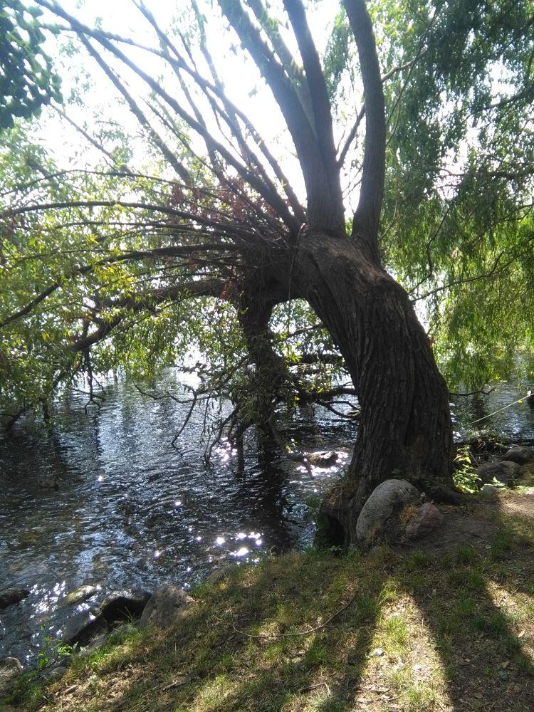 ombyggnation_kungsholmen_såga ned träd